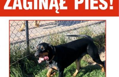 Internaucie szukają zaginionego psa