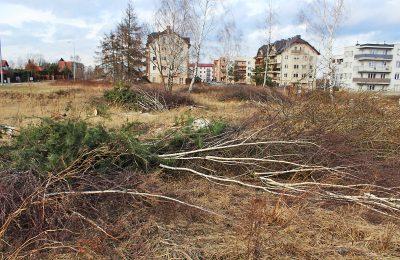 wycinka_drzew_lubartow_os_popieluszki_2017007