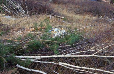 wycinka_drzew